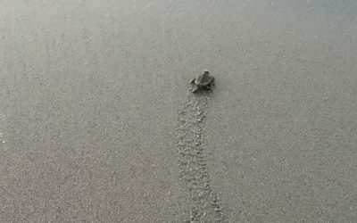 Giving Turtles a Crawling Chance
