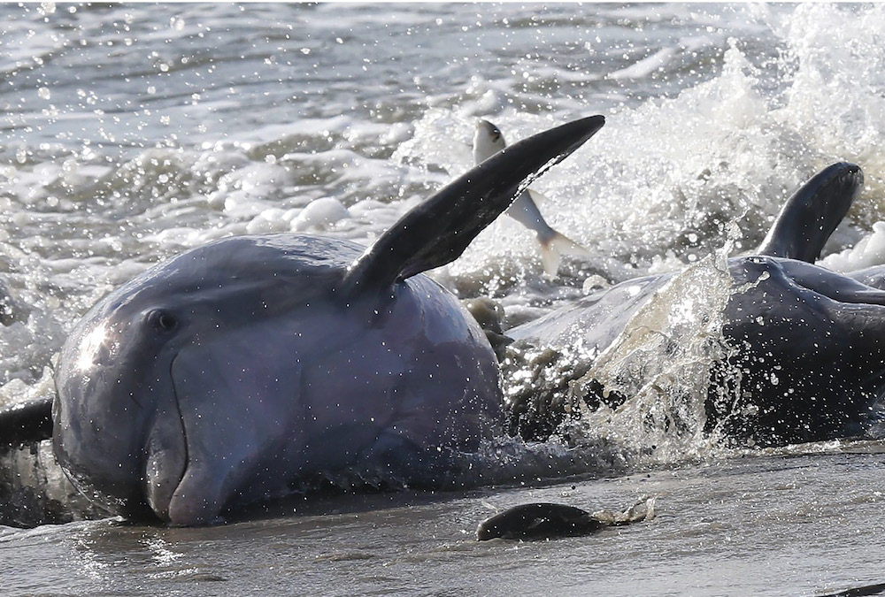 Celebrate Dolphin Week